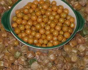 groundcherries-cossackpineapple_LRG