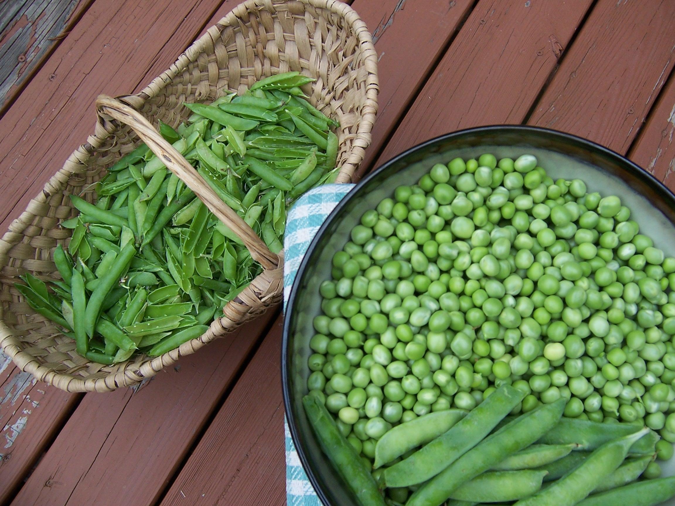 nice bush peas Part - 1: nice bush peas awesome ideas